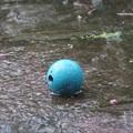写真: 雨