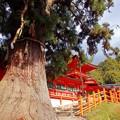 神さまの樹