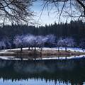 写真: 秘境櫻花林