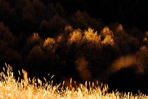 晩秋の落葉松林