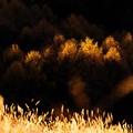 写真: 晩秋の落葉松林