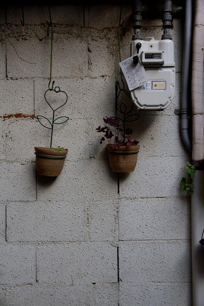 写真: 壁