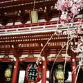 写真: 淺草垂櫻