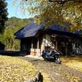 Photos: 観音堂の大銀杏