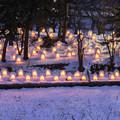 写真: 弘前城雪燈籠祭