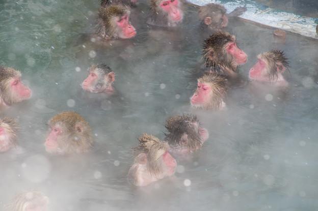 写真: 函館市熱帯植物園 猿の温泉