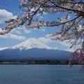 河口湖長崎公園にて