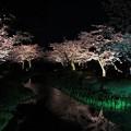 IMG_2979  夜桜