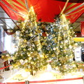 写真: 金沢駅のXmasツリー IMG_8219