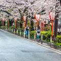 写真: 櫻花路