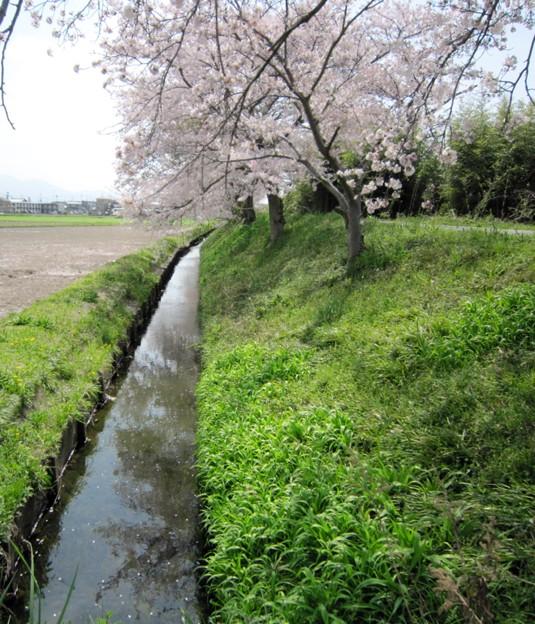 Photos: 畦に流れる