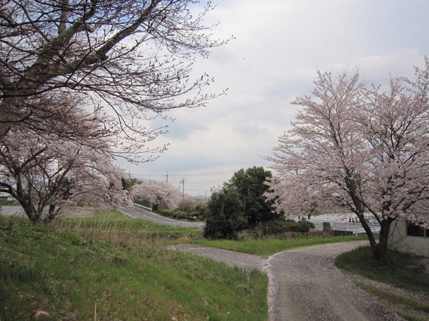 Photos: 先祖供養の路