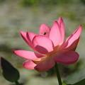 写真: 安らぎの花