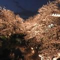 写真: 五条川の桜(夜) 2017