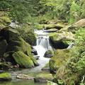 写真: 苔むす渓谷