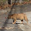 写真: 今市石畳通りの生き物たち4