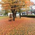 落ち葉のカーペット1
