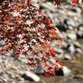 渓流沿いの紅葉