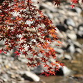 Photos: 渓流沿いの紅葉