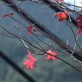 写真: 秋も大詰め (1)