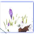 写真: 春なのに~