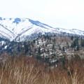 写真: 残雪残す十勝岳