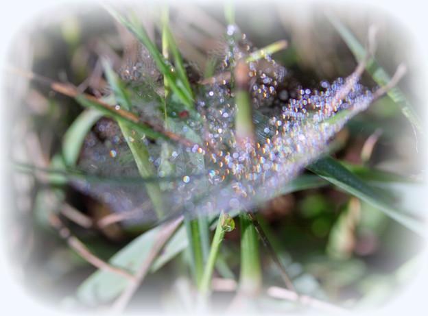 Photos: 雨上がりのクモの巣