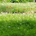 写真: 雑草と呼ばれる花の輝き~☆
