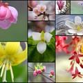Photos: 我家のお花さん