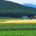 写真: 作物の色彩