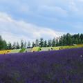 写真: 紫に埋もれる