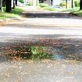 写真: 雨上がりの水溜まり
