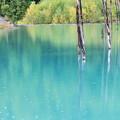 写真: 秋の青い池