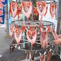 Photos: 羅臼の魚