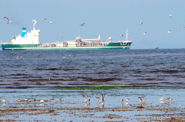写真: シギチとカモメと船