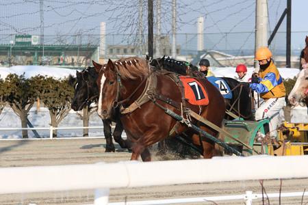 イナノトップ レース_1(17/01/21・4R)