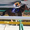 ゴールドドリーム 返し馬(17/02/19・ 第34回 フェブラリーステークス)
