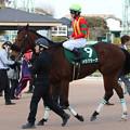 メラグラーナ レース後(17/03/04・第12回 夕刊フジ賞オーシャンステークス)