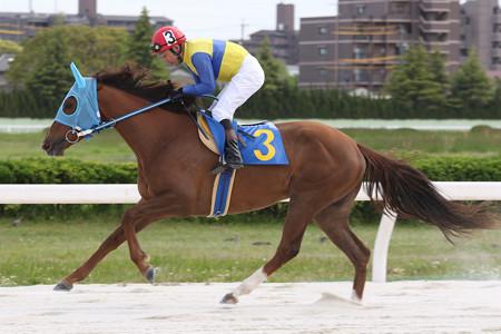 クインザドリーム 返し馬(17/05/04・中日スポーツ杯 第56回 駿蹄賞)