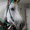 写真: ミルキー_2(17/08/14・BOAT RACE蒲郡)