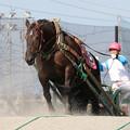 写真: ゴールデンエイジ  レース_2(17/07/30・2R)