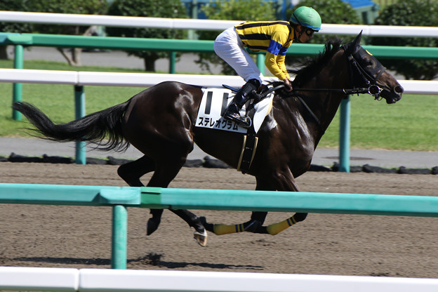 ステレオグラム 返し馬(17/09/18・6R)