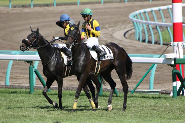 ステレオグラム レース後(17/09/18・6R)