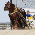 写真: ドルフィン レース(17/03/20・5R)