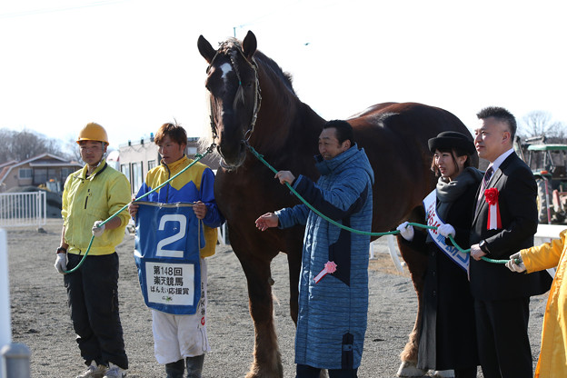 写真: ドルフィン 口取り(17/03/20・5R)