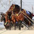 写真: メジロゴーリキ レース(17/03/20・北海道新聞社杯若草特別)