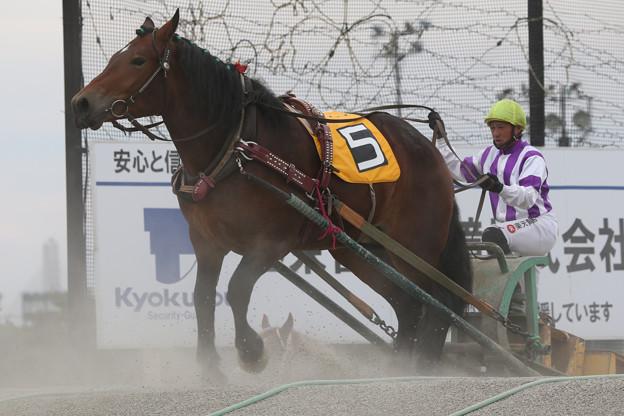 ウィナーサラ レース(17/07/30・5R)
