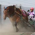 写真: ヤマトジャパン レース_2(17/07/30・4R)