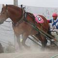 写真: チェイスアドリーム レース(17/07/30・7R)