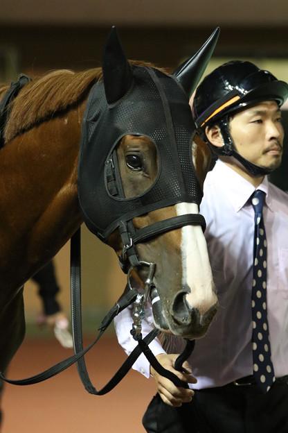 ケイティブレイブ パドック_2(17/09/27・第64回 日本テレビ盃)